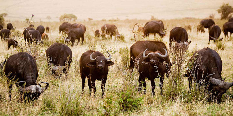 masai-mara-air-safari-mombasa