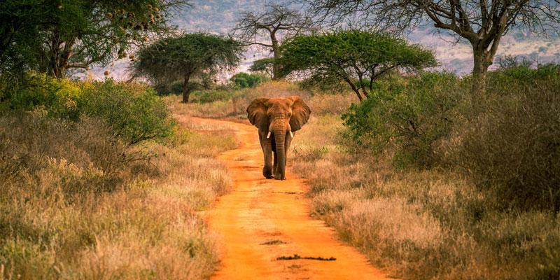 tsavo-east-safari