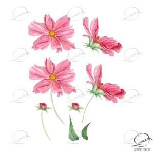 floral-elementos-cosmos flores do campo- denise bruno studio