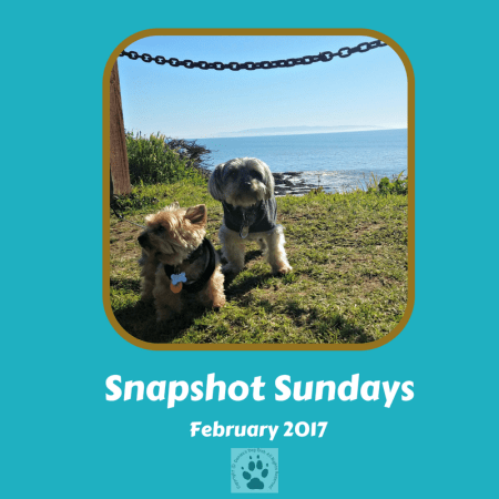 Snapshot Sundays February-Main image