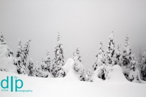Snow Trees, Hurricane Ridge, Olympic National Park