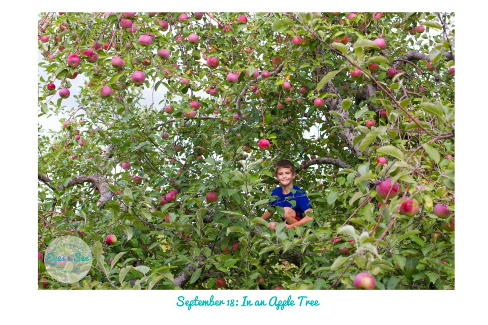 sept-18-in-an-apple-tree