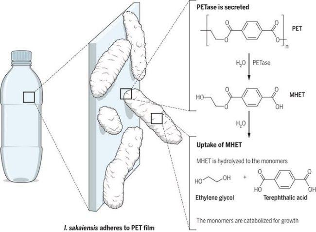 Platik Bakteri1