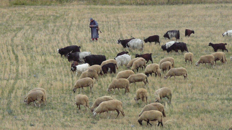 Pastoralmacht ohne Pastoren