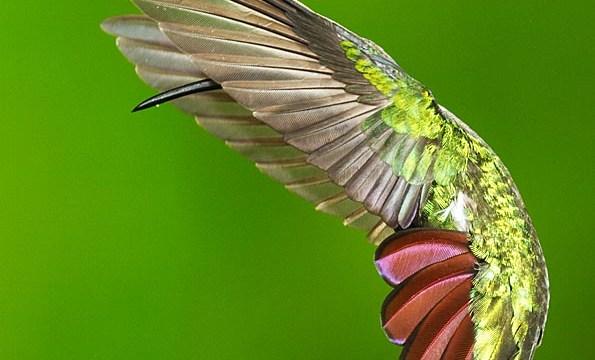 Audubon Magazine Birds In Focus Winner