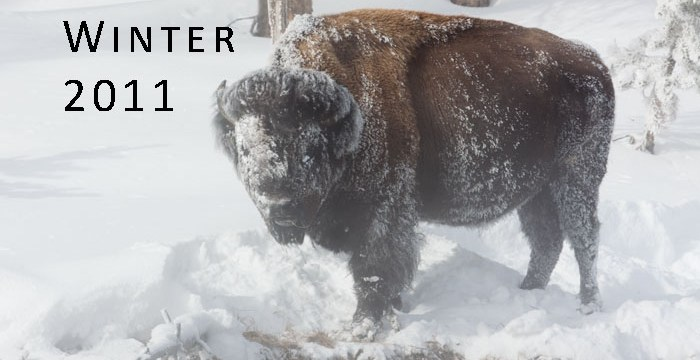 Yellowstone National Park in Winter — Part 1