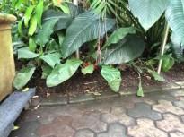 2014-08-31 Atlanta Botanical Garden-21