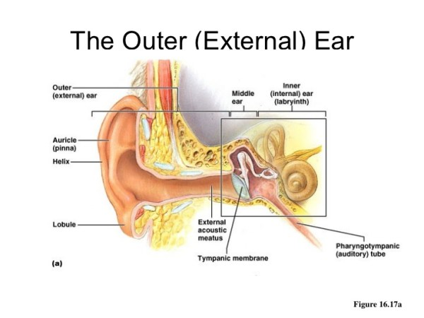 Outer Ear Diseases Related To It Denoc