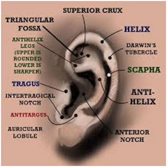 Outer Ear & Diseases Related To It - Denoc