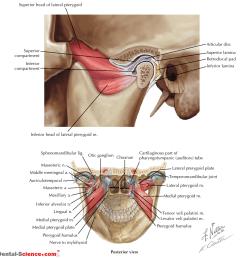 temporomandibular joint 2 anatomy  [ 997 x 1004 Pixel ]