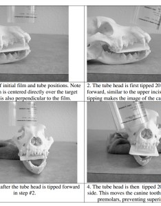Positioning for maxillary canine also simplified dental radiology dentalaire products rh dentalaireproducts