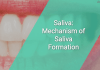 Saliva: Mechanism of Saliva Formation
