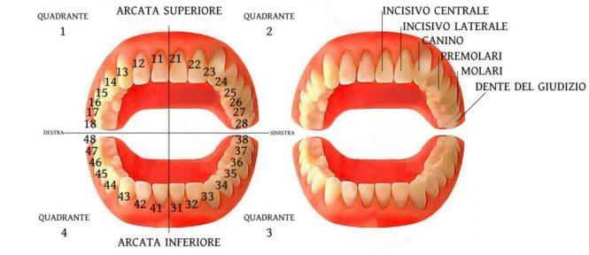 numerazione-denti-FAQ-web