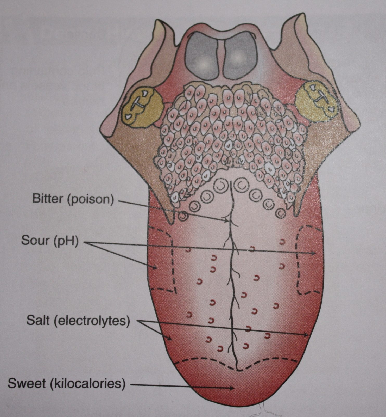hight resolution of oral cavity