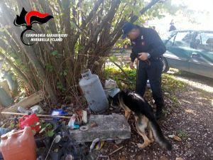 carabinieri-cane-droga-taurasi