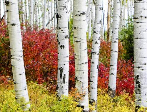 CTO aspens in Denver this week September 9th - 16th, 2016