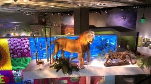 Perot Museum, Dallas
