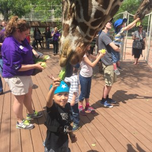 This is a great opportunity for zoo guests of all ages to get close to the giraffes