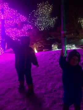 Light Sabers at Denver Botanic Garden