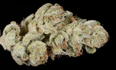 Gorilla Glue 4 Marijuana Review The Denver Post