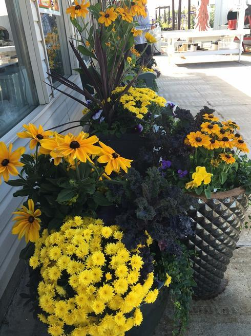 Beyond Pansies And Mums Ideas For Colorful Fall Containers The Denver Post