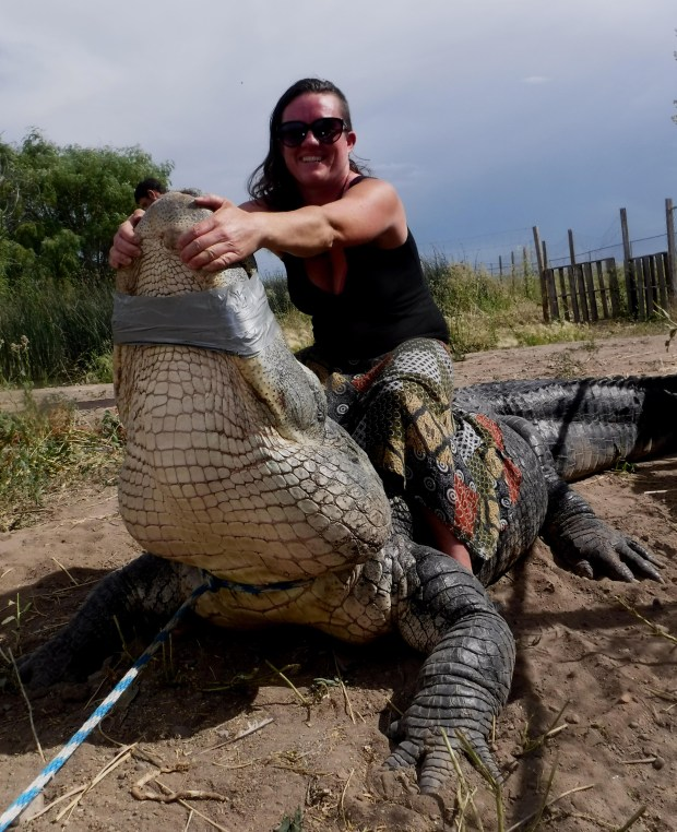 Erin Young, the co-owner of Colorado Gators Reptile Park in Mosca, poses with Bruce, a 12.5-foot alligator her husband Jay acquired from Idaho.