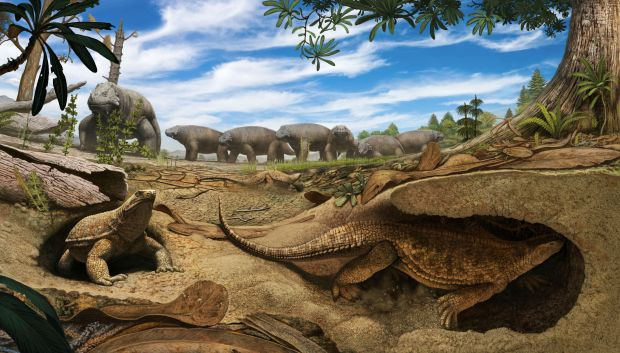 An artistic rendering of the early proto-turtle Eunotosaurus (foreground) shows it burrowing into the banks of a dried up pond to escape the harsh, arid environment present 260 million years ago in South Africa.