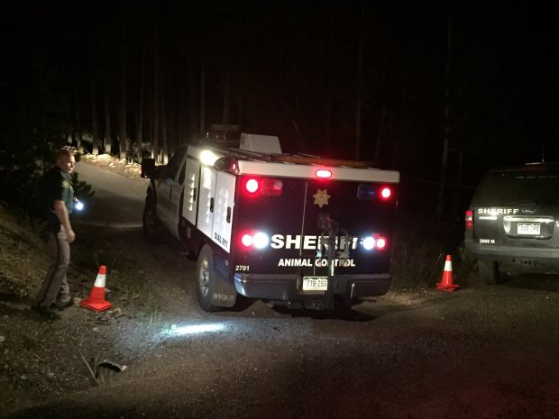 Two dogs involved in a fatal attack were taken alive by Jefferson County Animal Control officers and sheriff's deputies.