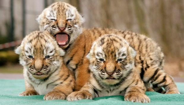 photos baby animals from