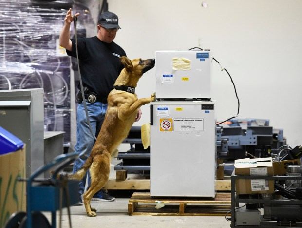 Denver Sheriff's Deputy John Curry demonstrates the abilities of his Sheriff's dog in training, Kuko, a 14-month-old Belgian Malinois, who sniffed out a bag of crack cocaine that was placed in a refrigerator at a undisclosed government warehouse Nov. 16, 2016.