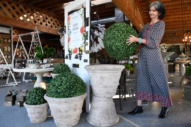 Annie Huston, owner of Birdsall and Co. Home and Garden shop preps her store for it's reopening this week at it's new location on South Broadway  on November 7, 2016 in Englewood, Colorado. Huston can help teach homeowners how to keep outdoor living spaces tidy and cheerful for the fall/early winter season. The natural boxwood plants are real but have been preserved so they look fresh and green into the fall and winter when placed in outdoor pots.
