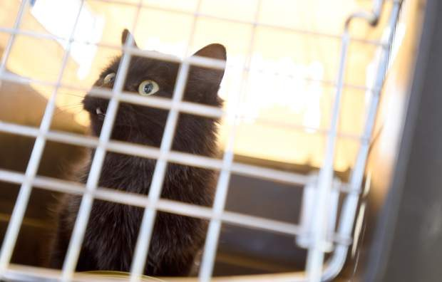 The rescued cat looks out from the pet carrier on Wednesday after safely arriving on the ground.