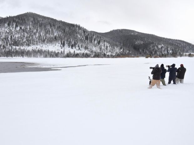 On Dec. 16, 2016, birders photograph the purple sandpiper spotted by brothers Jack and Ryan Bushong the previous day on the shores of Dillon Reservoir, marking the first-ever recorded sighting of the bird in Colorado. Since then, more than a 100 of the state's avid birders have flocked to the reservoir to see the bird.