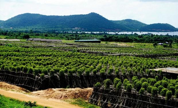 La Plantation pepper plantation in Kampot, Cambodia.