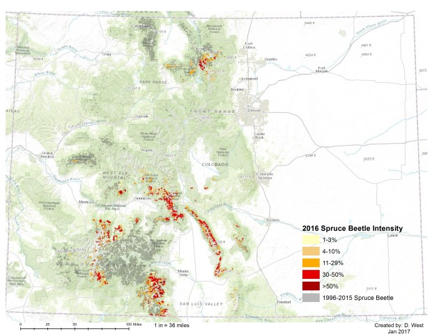This map provided by Colorado State Forest Service show the frequency of spruce beetles.