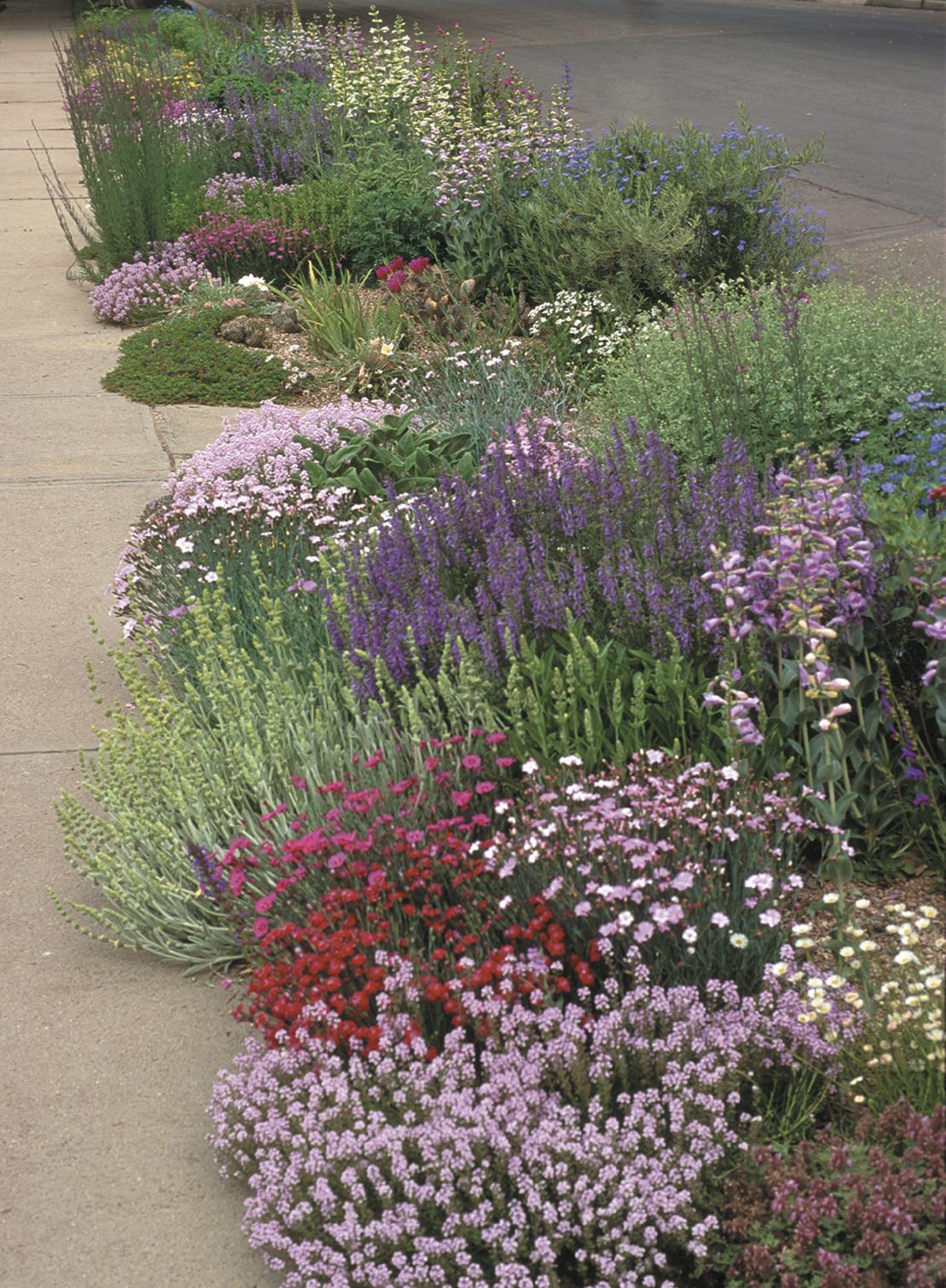 A Pre Planned Garden By Lauren Springer Ogden For High Country Gardens.