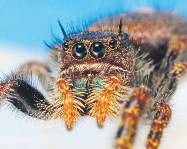 a study into the world of spiders In a study of trunk arthropods, spiders provided a relatively constant food source   the little things that run the world (the importance and conservation of.