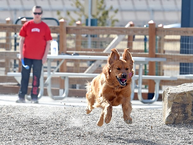 A dog chases a ball thrown by its owner at the dog park at Mehaffey Park in Loveland on March 8.