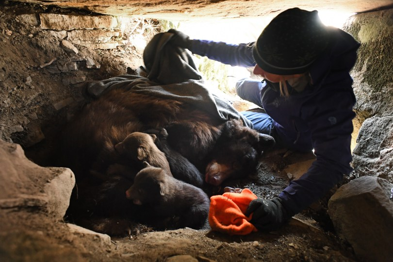Colorado Parks & Wildlife researcher Heather ...