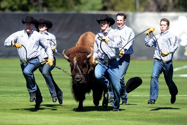 University of Colorado sports mascot Ralphie the buffalo runs on the field at a CU soccer game on Sept. 27, 2014. Denver Post columnist Patty Limerick, who works for CU in Boulder, was once pitted against Ralphie in a campus election for Best CU Personality.