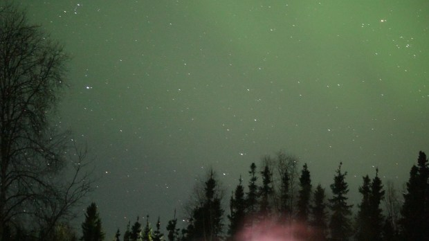 A few lingering Northern Lights are seen above black spruce trees in the early morning of Monday, March 27, 2017 at Mckenna Wall and Wyatt Dunlap's home in Salcha, Alaska.