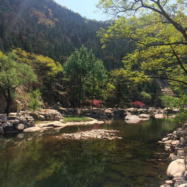 Pools of water are set against a stunning backdrop of pine trees glimpsed after a hike down Mount Tai through Peace Blossom Valley. Mount Tai is China's most sacred mountain.