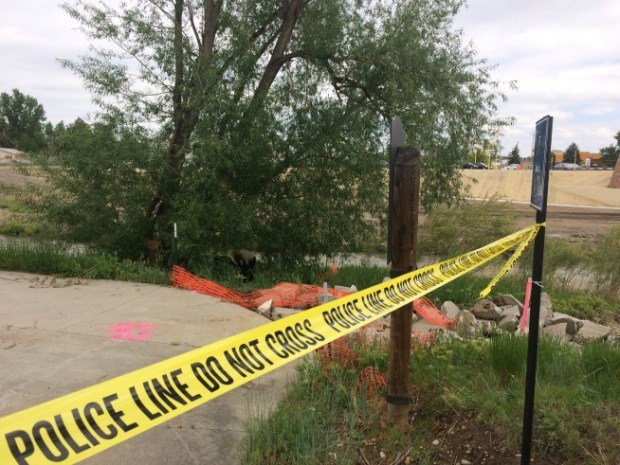 A man's body was found along the St. Vrain Creek in Longmont