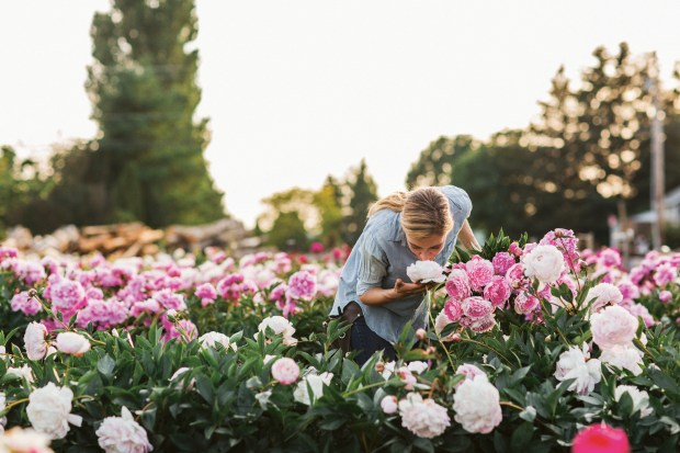 "Erin Benzakein in a field of peonies at North Field Farm in Bellingham, Wash. The photo is featured in Benzakein's book, ""Floret Farm's Cut Flower Garden."""