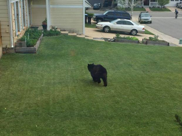 A bear was spotted in the Heritage Dells neighborhood over the weekend.
