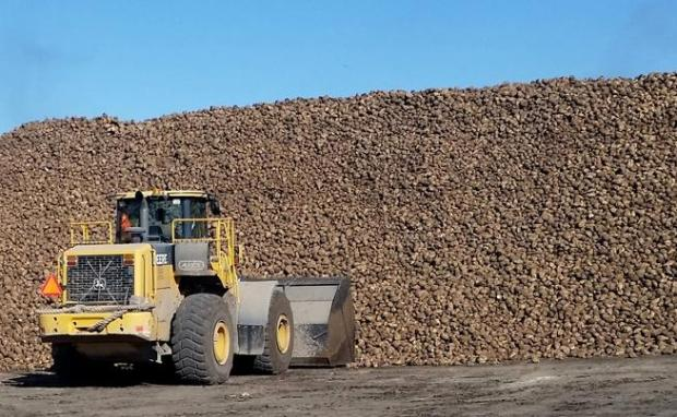 Towering piles of sugar beets awaiting processing have long been a common sight in Fort Morgan by the Western Sugar Cooperative factory, but those piles were even bigger over the past winter and spring due to increased capacity at the plant.