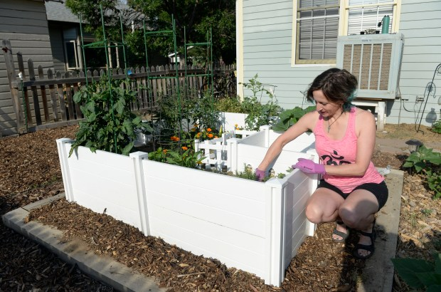 Megan Keefe tends to her keyhole garden in the backyard of her home in Lafayette. The garden's shape makes everything accessible -- both for the gardener and the compost tea that seeps out from the center. (Photo by Kathryn Scott/The Denver Post)