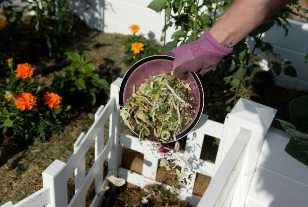 Megan Keefe adds food scraps are added to the compost bin at the center of her keyhole garden.