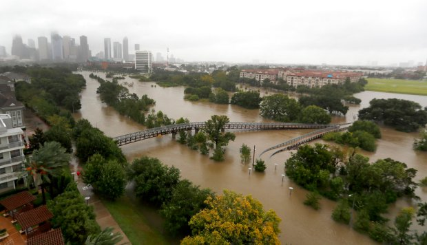Harvey Is Also Displacing Snakes Fire Ants And Gators The Denver Post