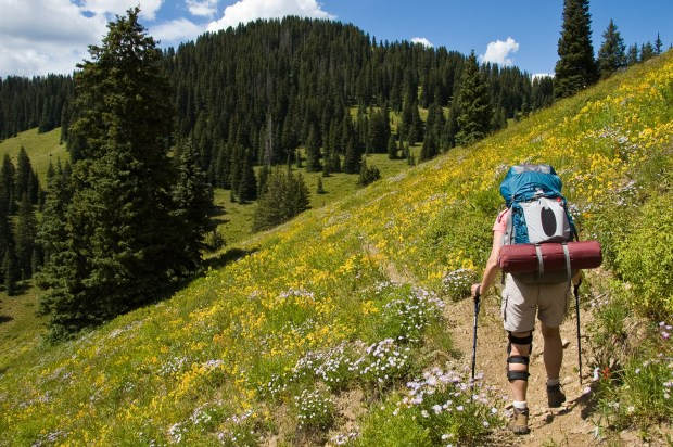 A person hikes through a flower-covered hillside on Sun Park Trail in the West Elk Wilderness Area in Gunnison National Forest.